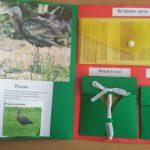 Міжнародний день птахів в університеті
