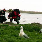 Тематичні заходи до Всесвітнього дня мігруючих птахів