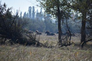 Студенти хіміко-біологічного факультету відвідали Азово-Сиваський національний природний парк