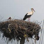 Міжнародний День спостережень за весняними міграціями птахів